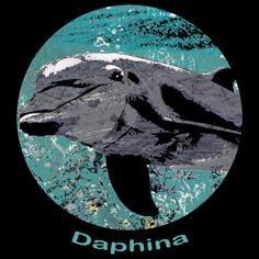 Daphina Activities