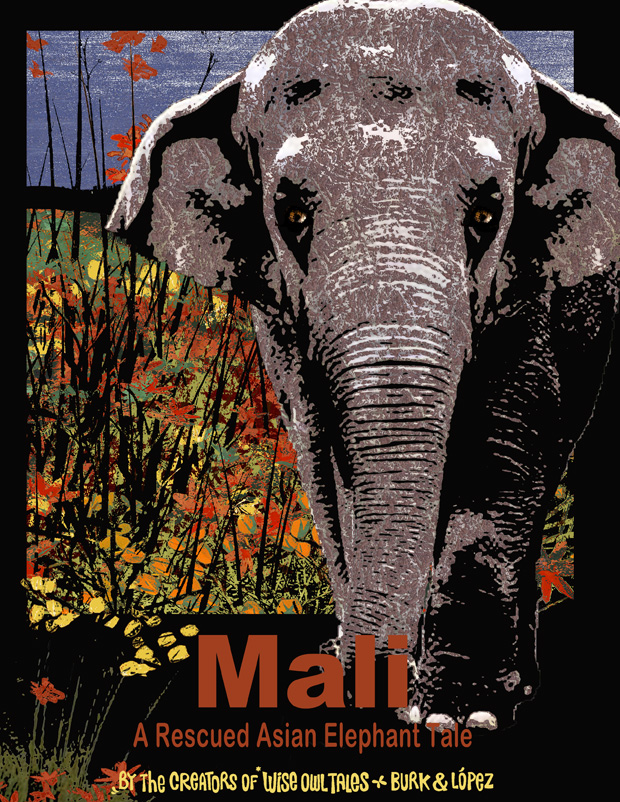 Mali – A Rescued Asian Elephant Tale